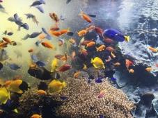 6. Oceanopolis - feeding time - May 2017