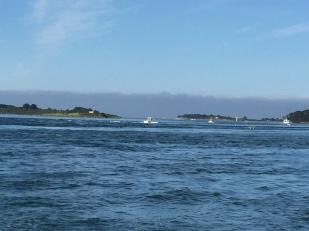 A4. Golfe Du Morbihan 12.6.17.