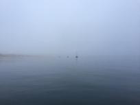 G5. Fog in Riveira 3.8.17.