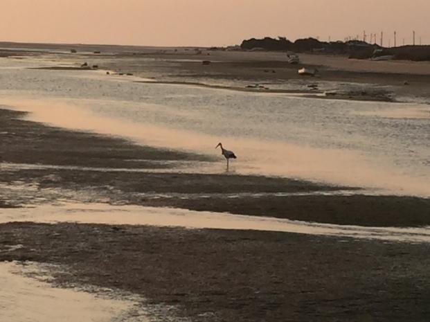 C3. Faro - stork 19.9.17.