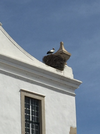 A4. Stork in next - Faro 01.10.17.