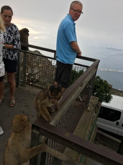 B2. Barbary apes, Gib 15.10.17.