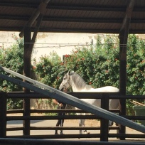D2. Horse at Jerrez 10.10.17.