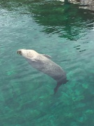 B2. Seal, Valencia 30.4.18.