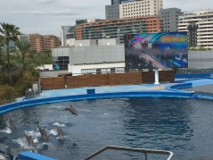 B3. Dolphins, Valencia 30.4.18.
