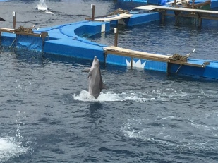 B4. Dolphins, Valencia 30.4.18.