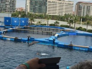 B5. Dolphins, Valencia 30.4.18.