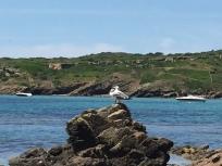 F4. Two gulls enjoying the sun, Illa d Colom 8.6.18.